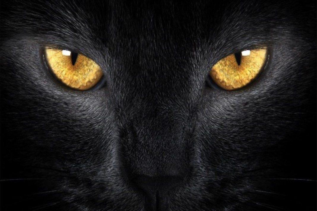 gatos eliminam energias negativas