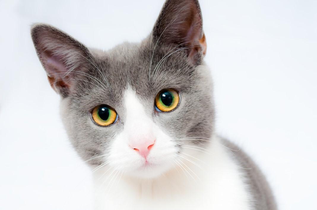 avisar o teu gato sempre que saíres de casa