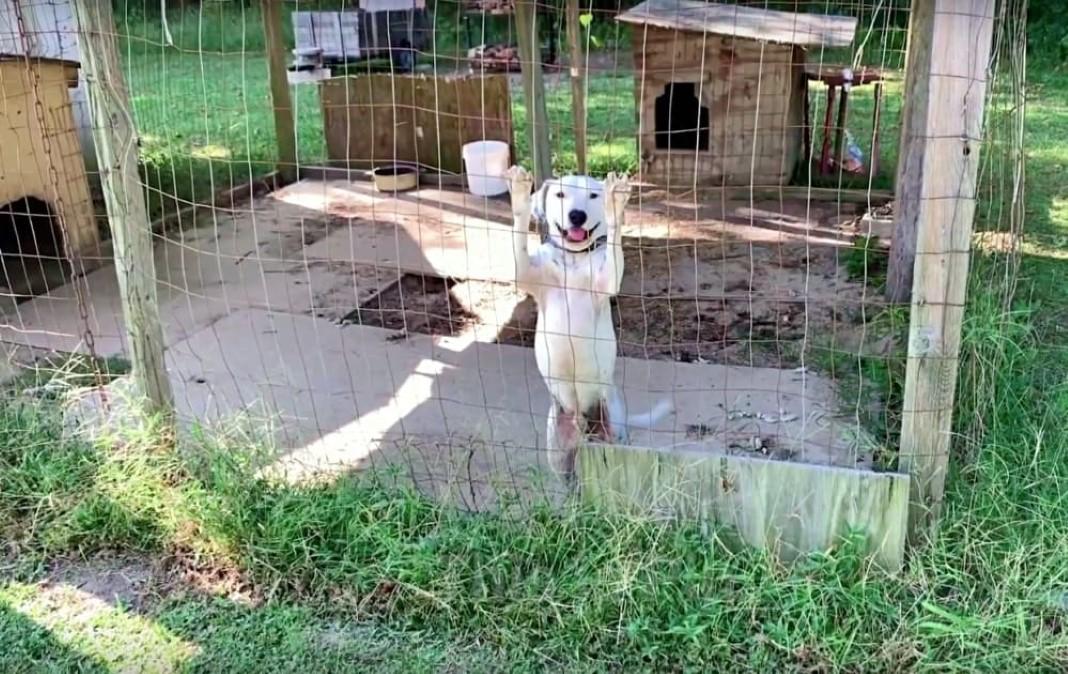 Cão preso e carente foi resgatado