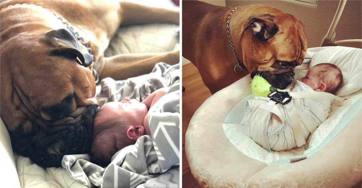 Cão consola bebé que chora
