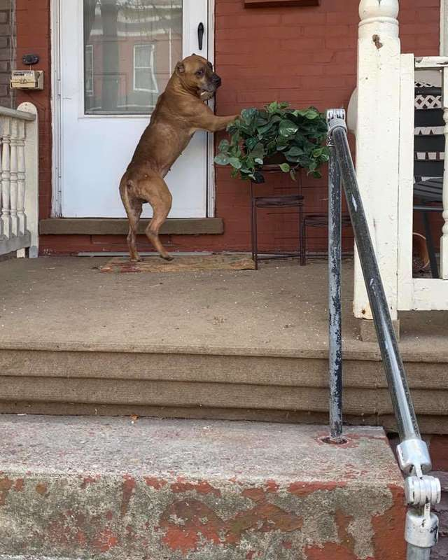 Cão esperou na varanda semanas