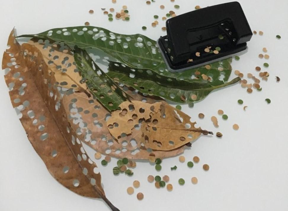 confetis ecológicos com folhas de árvores