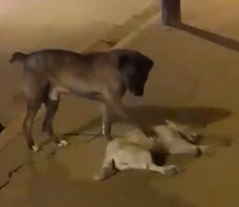 ressuscitar amigo atropelado