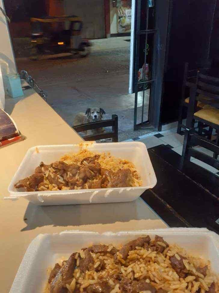 restaurante alimenta os cães de rua