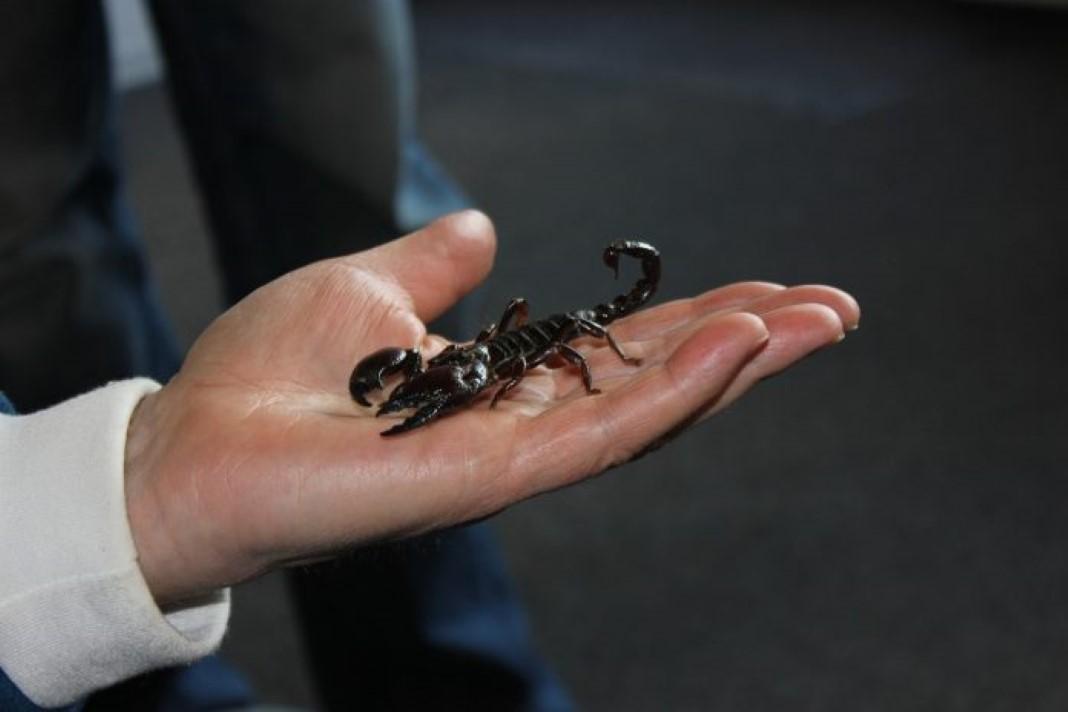 Conviver com alguém do signo escorpião