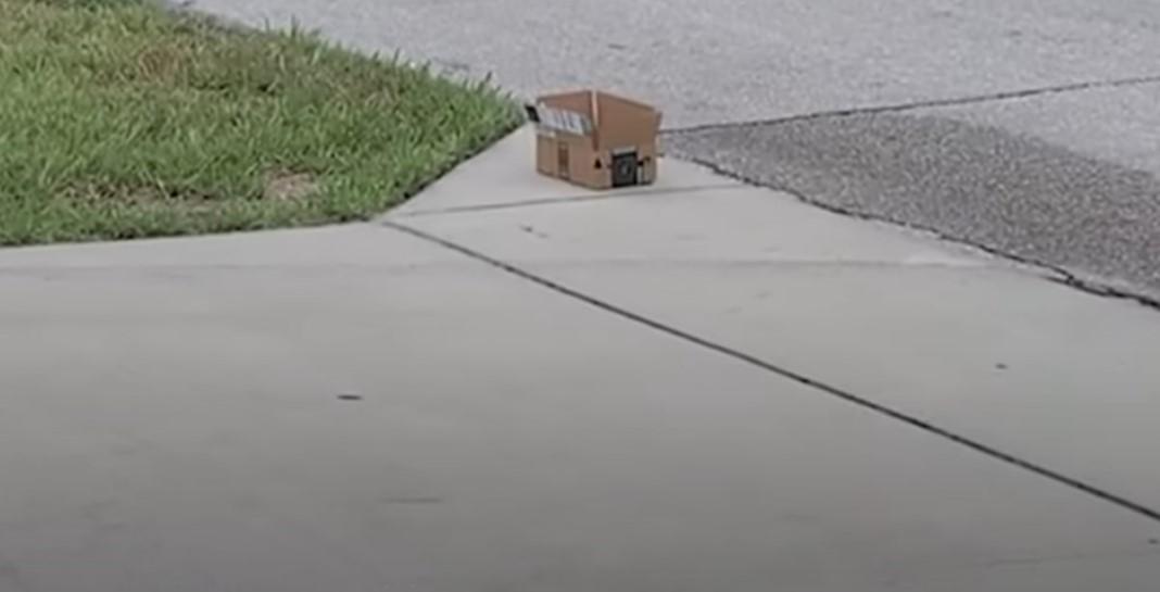 Mulher encontra cãozinho abandonado