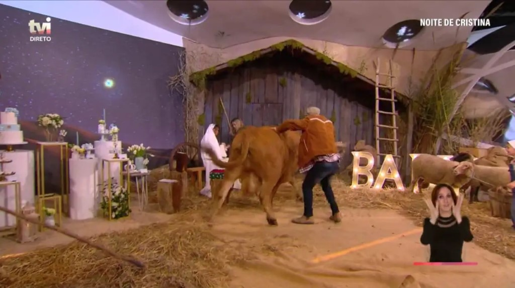 Vaca descontrolou-se e provocou o caos