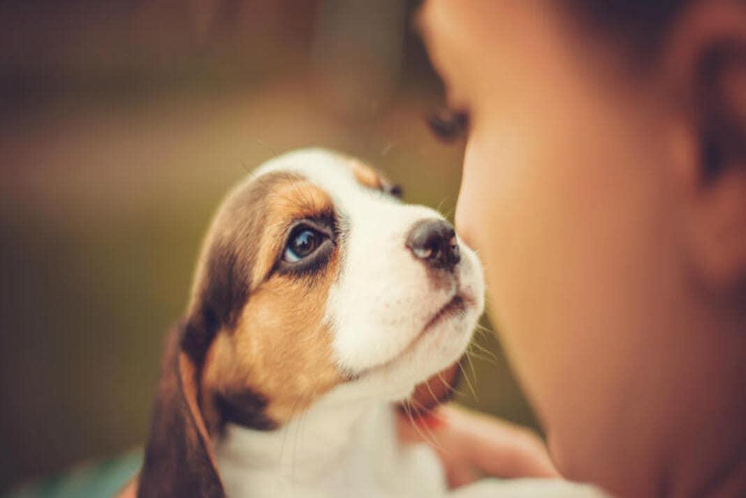 Se és do tipo que conversa com o teu cão, não estás louco. Ele entende-te, aponta pesquisa.