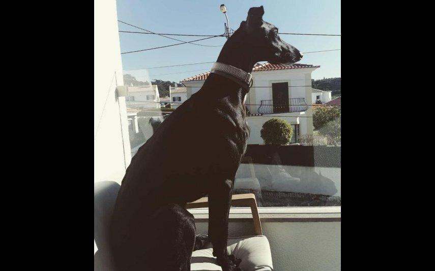Cães maltratados por João Moura